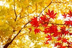 【甛糖拾光】💗苏州·天平山   追枫🍁逐杏🍂极速24h💫