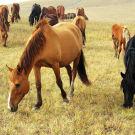 红山军马场攻略图片