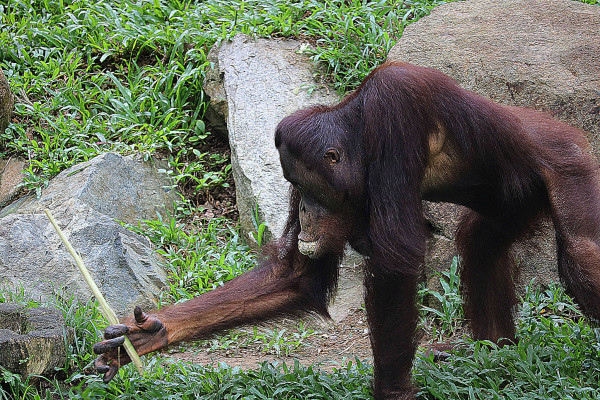 在新加坡动物园 给你一个无限亲近动物的可能
