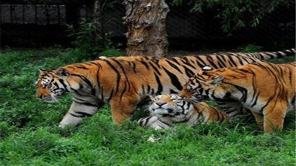 泉州泉州海丝野生动物世界门票