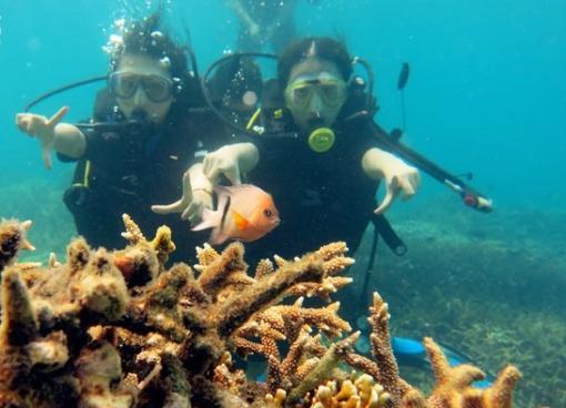 壁纸 海底 海底世界 海洋馆 水族馆 510_368