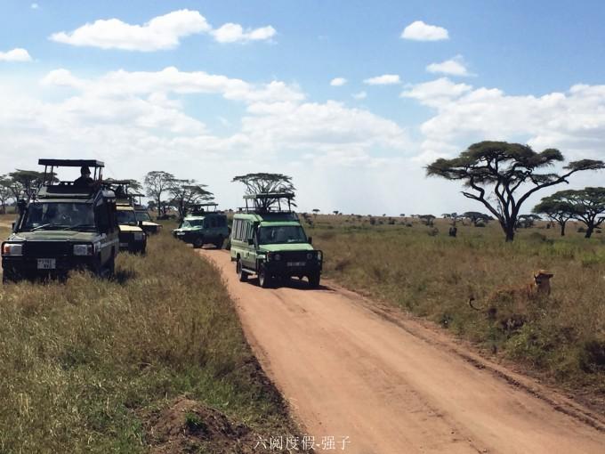 非洲肯尼亚坦桑尼亚动物大迁徙私人订制