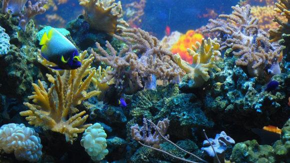 除了海洋生物外,水族馆内也有展出许多淡水鱼类,两栖类和爬行类等动物