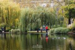 【赏秋三部曲】PART2【爱在深秋】秋成落叶叶成思——城市公园里的深秋