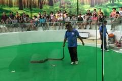 泰国蛇药小米版