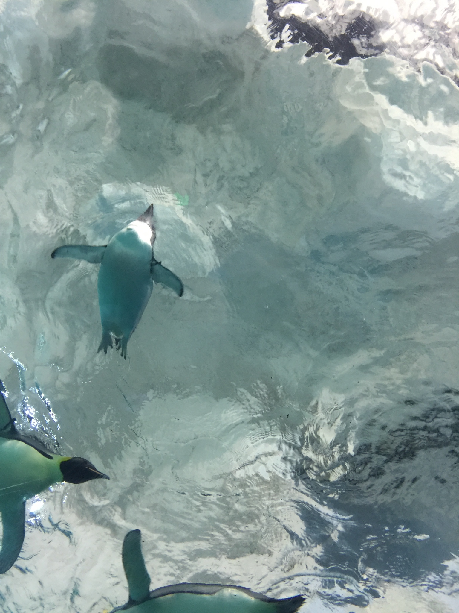 鲸鲨简笔画幼儿