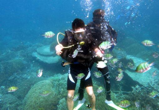 十一轻松go · 芽庄 黑岛专业浮潜/水肺潜水深潜一日游(含午餐 全程一