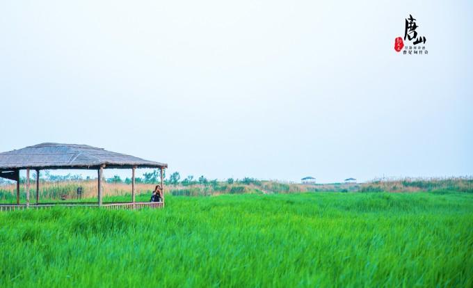 就是曹妃甸湿地旅游文化度假区中最值得游客前往的一处风景,占地3000