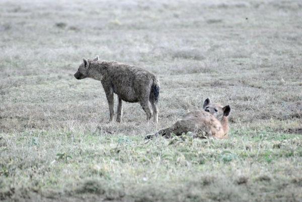 园,遇见真实的动物世界 坦桑尼亚塞伦盖蒂桑给巴尔最新攻略信息 -图片