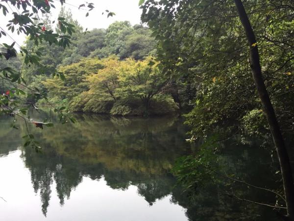 游水墨画般的大明山吃千岛湖鱼头回忆许仙白娘