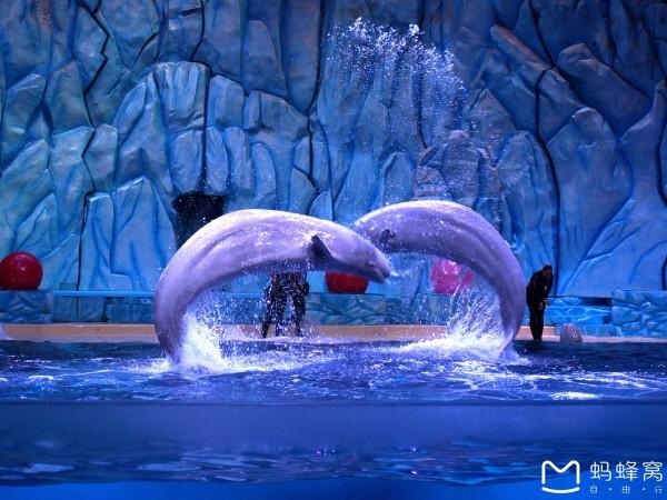新年珠海海洋公园换了两日游