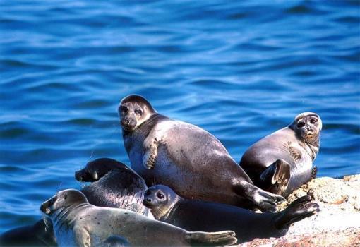 早餐后开车前往探索贝加尔湖心脏,感受萨满文化-奥利洪岛之旅。 奥利洪岛-贝加尔湖有22个岛屿,奥利洪岛是最大的一个岛 萨满岩-萨满信仰中最重要的圣地之一 主要景点介绍: 【奥利洪岛】:有贝加尔湖第一岛之称,如果说贝加尔湖是西伯利亚的明珠,奥利洪岛就是这颗明珠的心脏,它将向你展现最原始生态的一面。奥利洪岛又是萨满教的中心,自然风光非常迷人,处处都能感受到淳朴的民风。 【萨满岩】:是一块突出在贝加尔湖边的巨大岩石,是萨满信仰中最重要的圣地之一。岩石旁矗立着一棵萨满树,上面缠满了五颜六色的经幡,寄托着人们美好