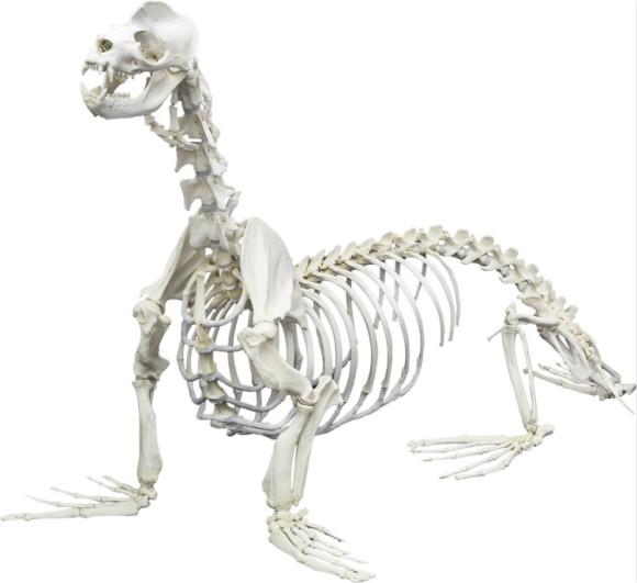 """【快速出票】美国/奥兰多""""动物骨骼博物馆""""门票"""