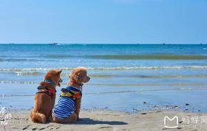 【普者黑图片】带狗自驾:一车两人三狗,游走在中国西部的81天【云南广西及归家篇】