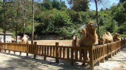 贵阳贵州森林野生动物园门票