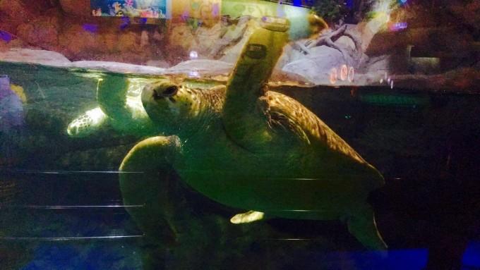 壁纸 动物 海底 海底世界 海洋馆 水族馆 鱼 鱼类 680_383