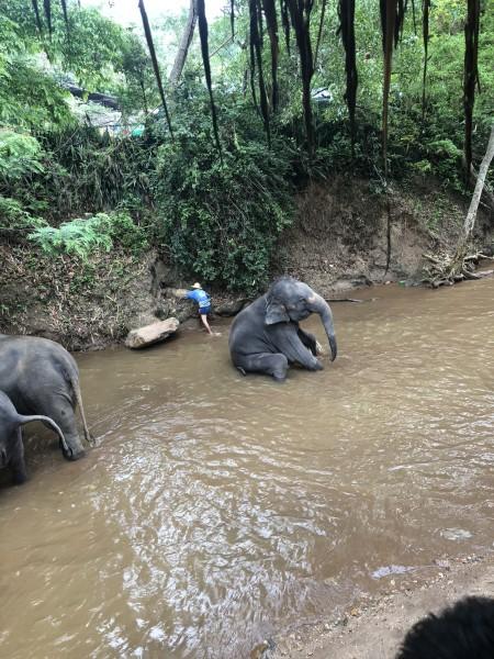 这是个象宝宝 洗的开心了好像在笑呢   我爱洗澡皮肤好好~   大象表演分为几项 我照了最后一项 画画 我真心觉得如果不是受过残酷的训练是不可能画出如此惊人的画的 大象真是聪明 我画的还不如大象呢¦》♀??