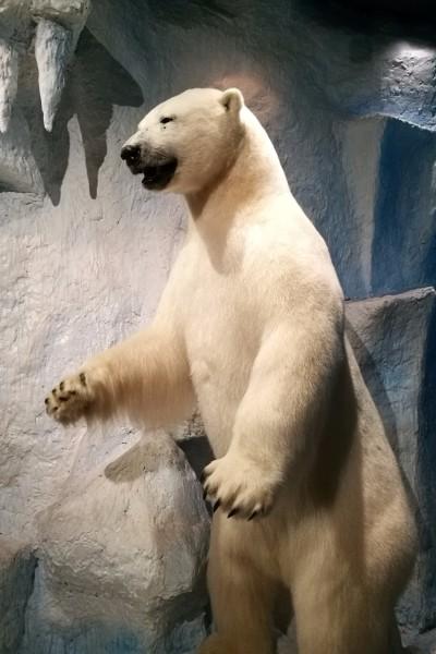 偿捐赠给深圳博物馆的野生动物标本,分为草原,沙漠,森林,极地四个展区