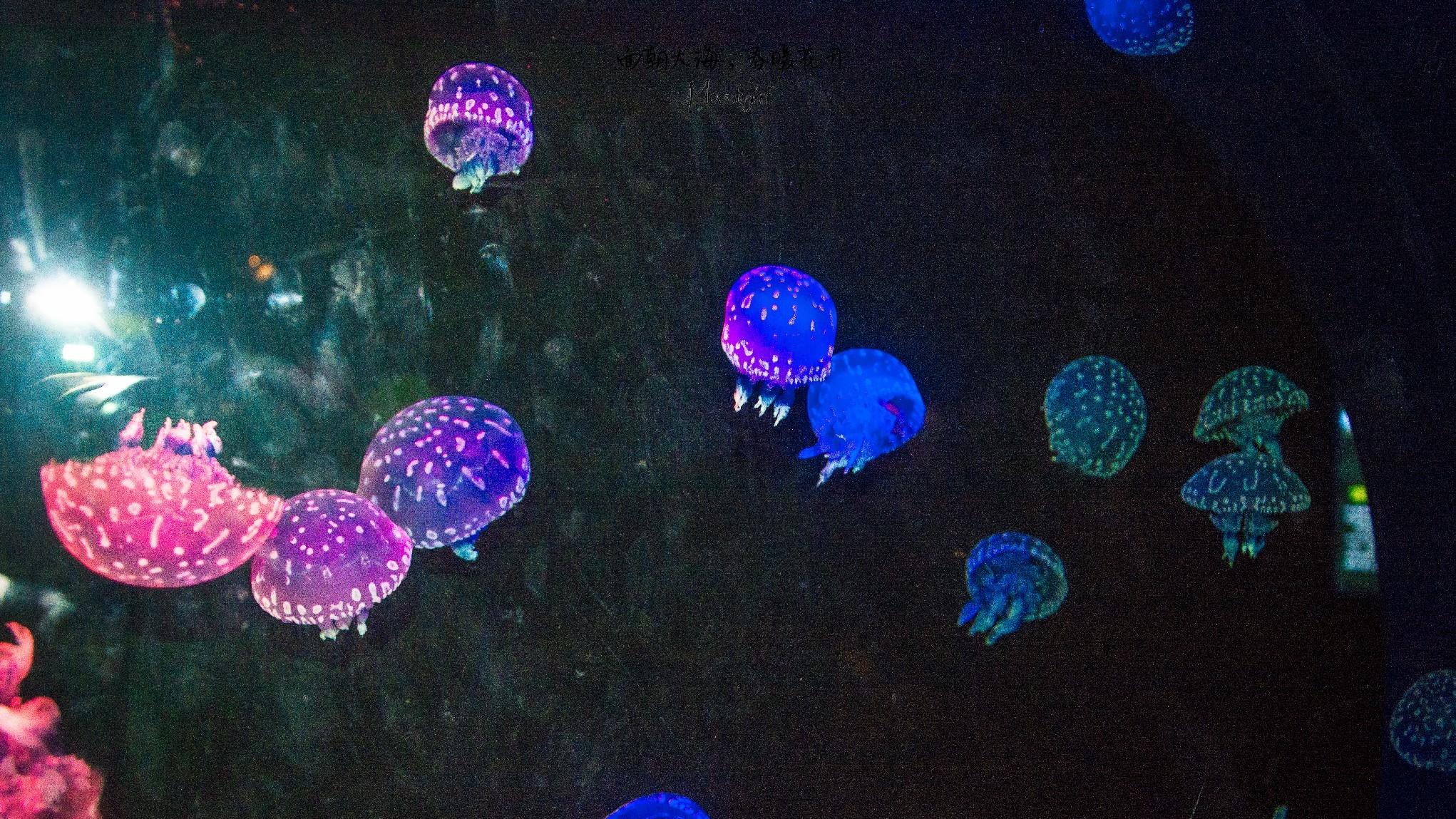青岛海洋世界四大展馆攻略,亮点解析