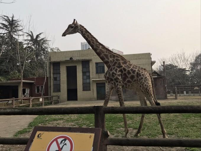 成都动物园,大熊猫基地及重庆动物园!成渝四日游!