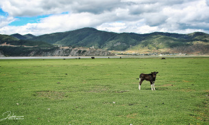 纳帕海依拉草原