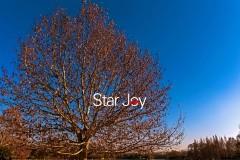 冬日·暖阳 和风·园景 慢泡汤 —— 星悦享