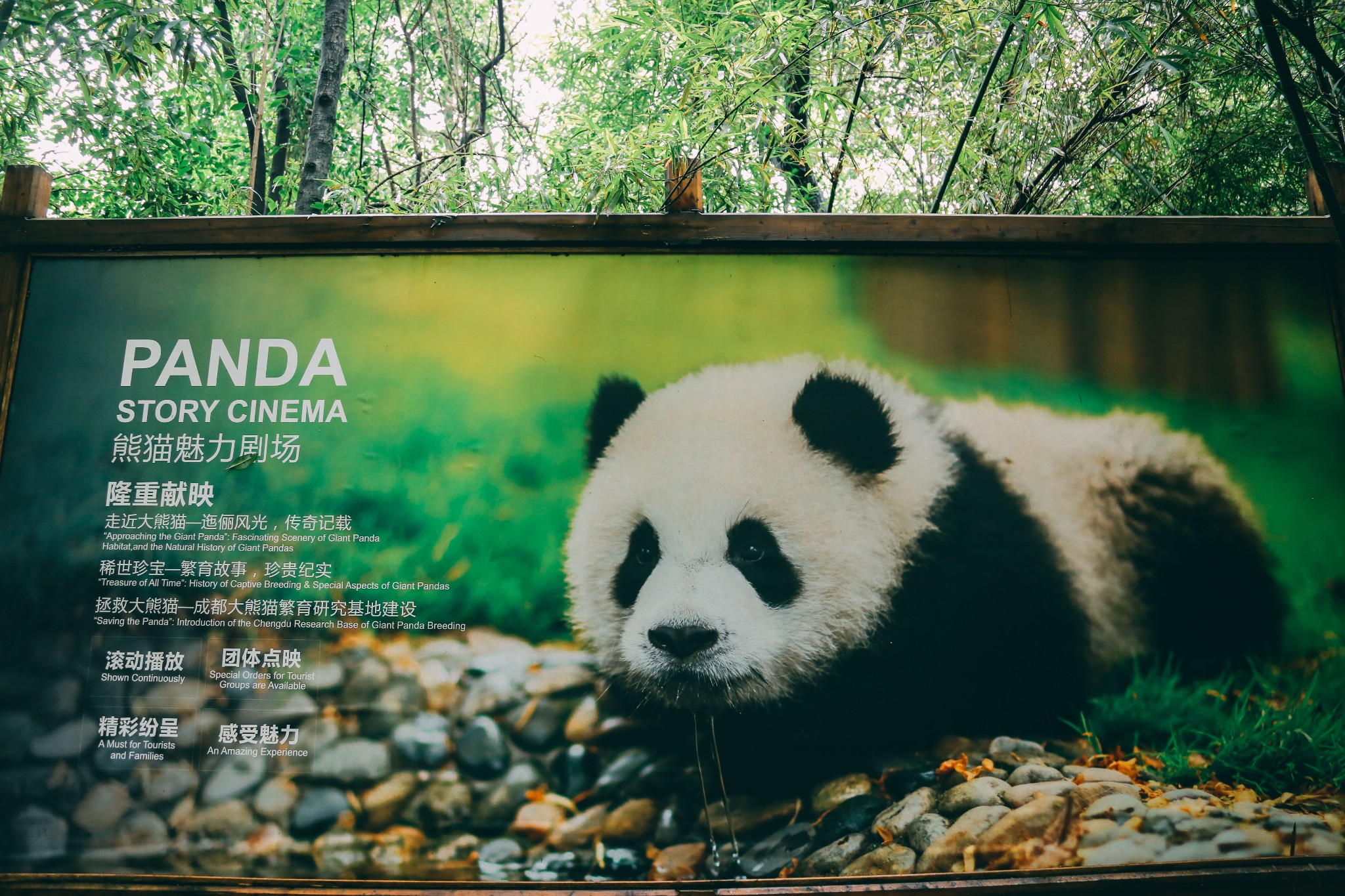 China ChengDu Panda
