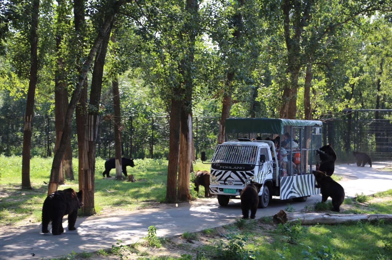 大兴北京野生动物园全称北京野生动物园,所在地址:大兴区榆垡镇。 消费特色:汇集世界各地珍稀野生动物。 大兴北京野生动物园占地3600亩,汇集了世界各地珍稀野生动物200多种10000余头。园区位于北京市大兴区榆垡镇万亩森林之中,紧邻京开路,距玉泉营39公里交通十分便利,驱车沿京开高速公路至此只需30分钟。动物园以散养、混养方式展示野生动物,设散放观赏区、步行观赏区、动物表演娱乐区、科普教育区和儿童动物园等,建有主题动物场、馆32个;在散放观赏区,成群的狼和牛、狮子和狒狒共同生活在一个区域,通过数量的控制使