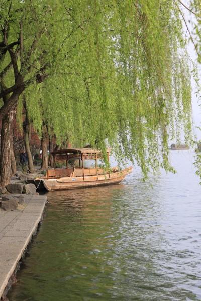 春天老柳树图片