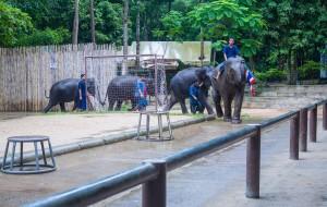 苏梅岛娱乐-那慕昂动物园