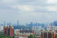 深圳:塘朗山梅林水库穿越 左手福田右手南山 野生杨梅林荫小径