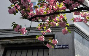 【波恩图片】德国春季赏花,不可错过的波恩樱花大道