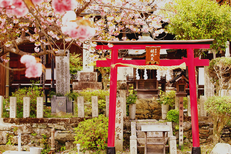 【小雪去旅行】较为失败的樱花之旅~(纯游记加避免弯路加留念)_游记