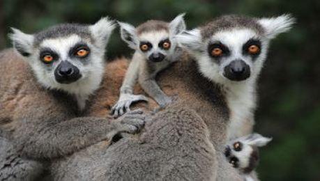 海口·天鹅湖动物基地门票(含天鹅湖动物基地 象龟天地 鹦鹉世界 狐猴