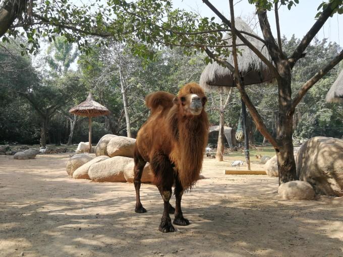 广州番禺长隆野生动物世界自驾区