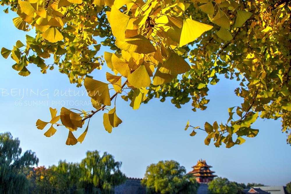 京城秋韵,这是一座尽染秋色的都城