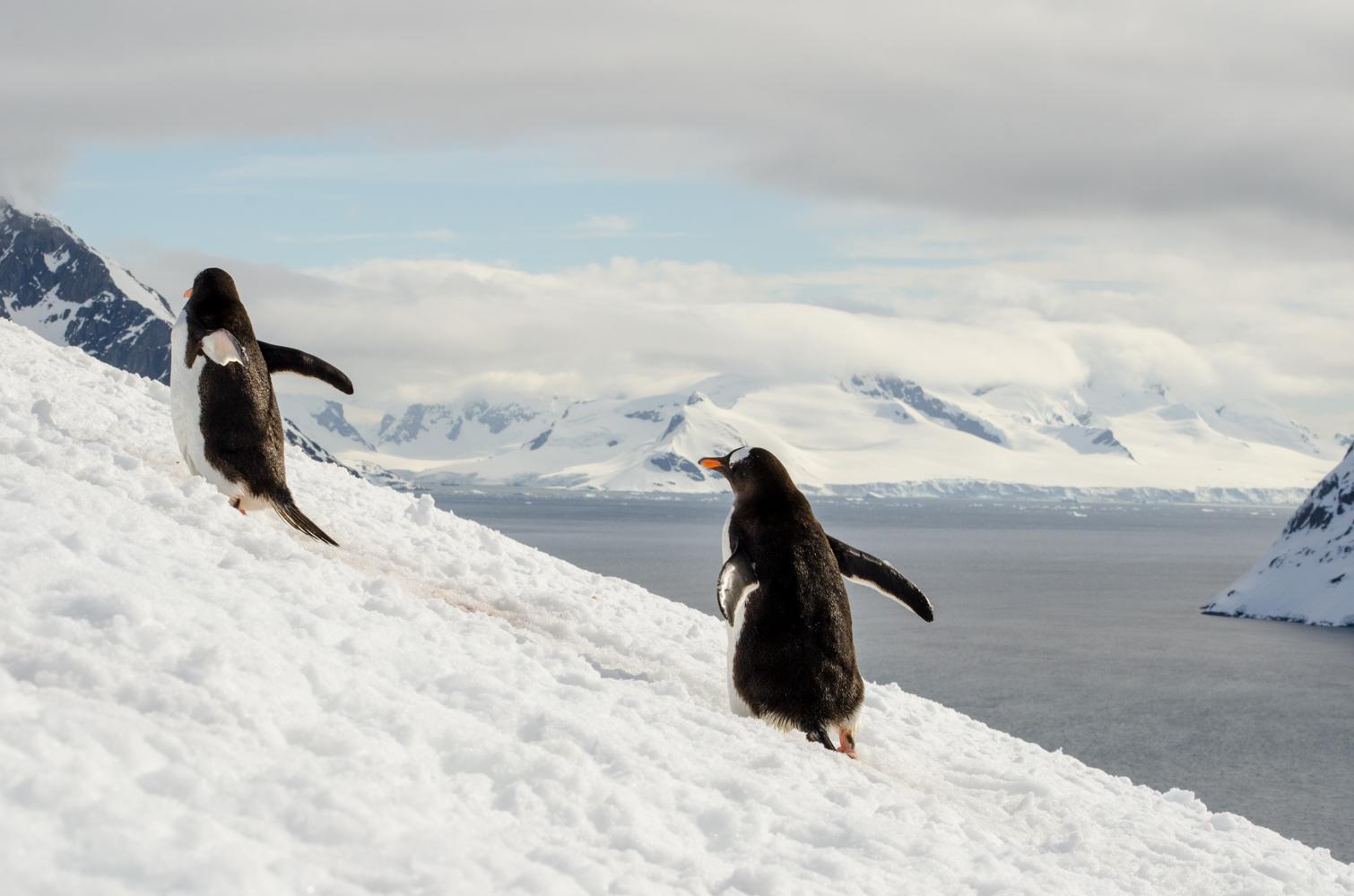 ·南极—那至今未知的大陆,究竟能窥探到什么?_游记