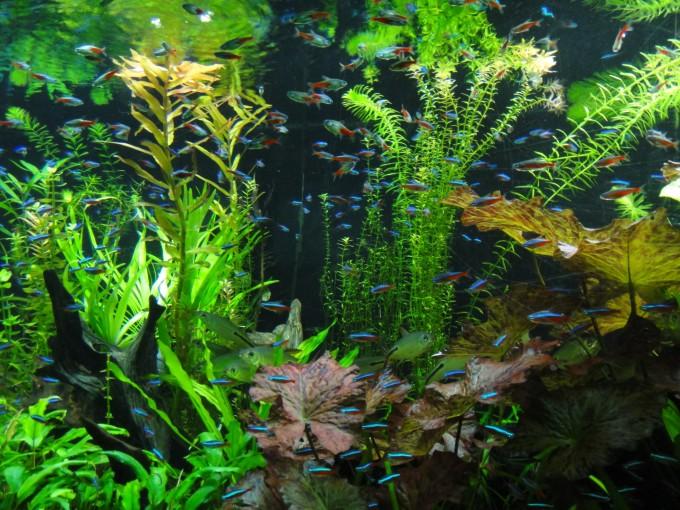 徜徉在动物的世界——上海野生动物园,上海海洋水族馆