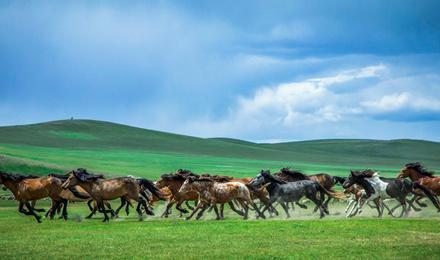 到内蒙古想要骑马,看大草原,吃羊肉什么的,应... _补肾参考网