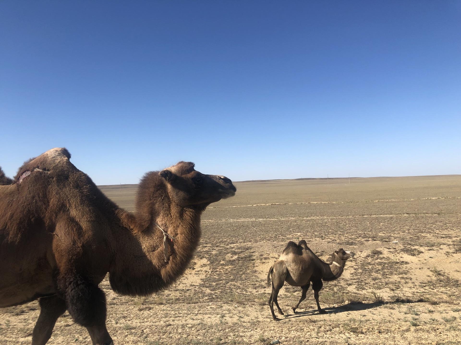 细聊我的新疆游之九