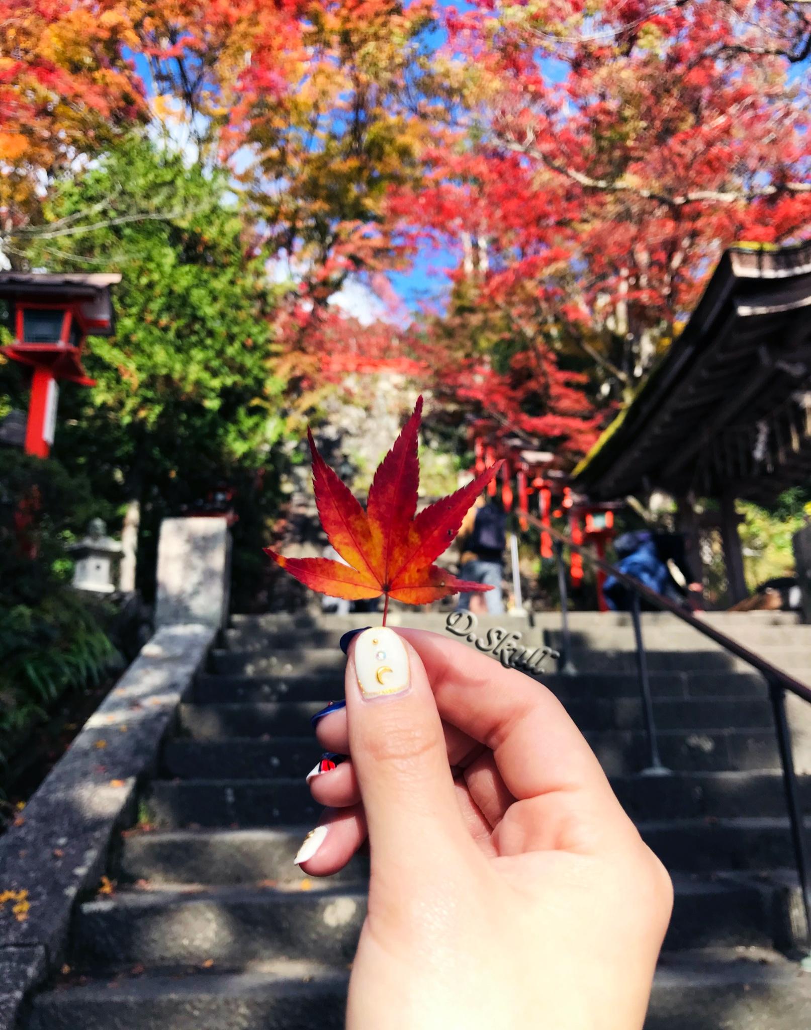 ·日本关西🍁红叶狩🍁—— 枫叶季带亲妈暴走京都 奈良 大阪_游记