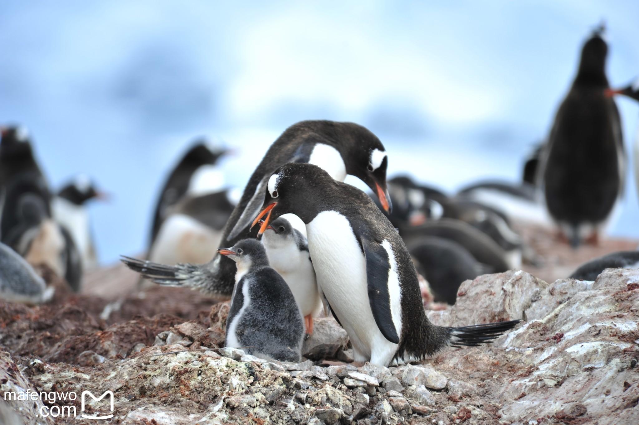 疫情下一波N折的南极之旅-图片与视频集锦_游记