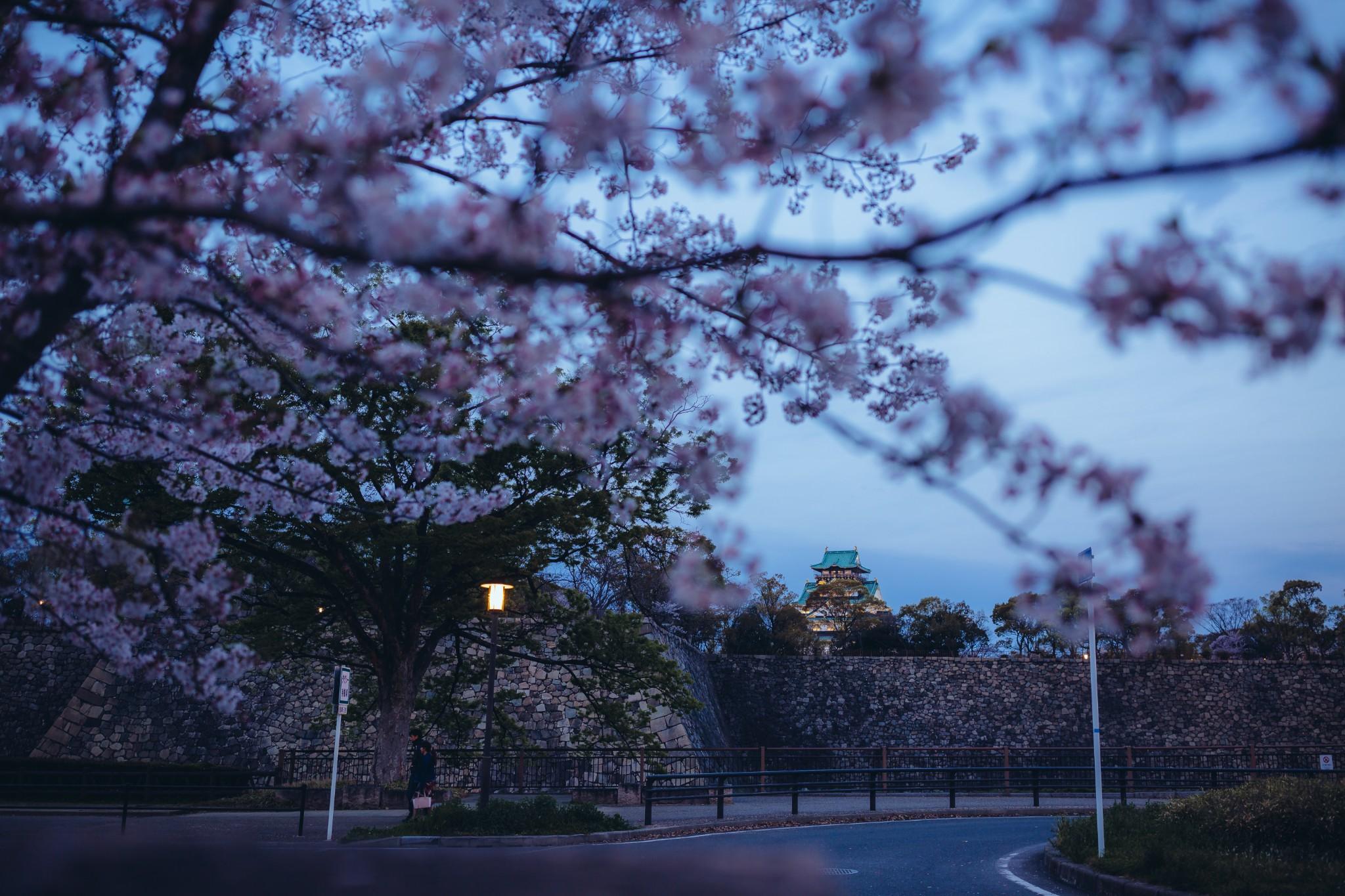 ·我的日本赏樱之行【京都】【奈良】【神户】一场唯美的旅行。_游记
