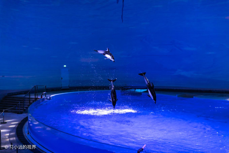 三十八度的夏末,在上海海昌海洋公园收获的清凉-旅人制造