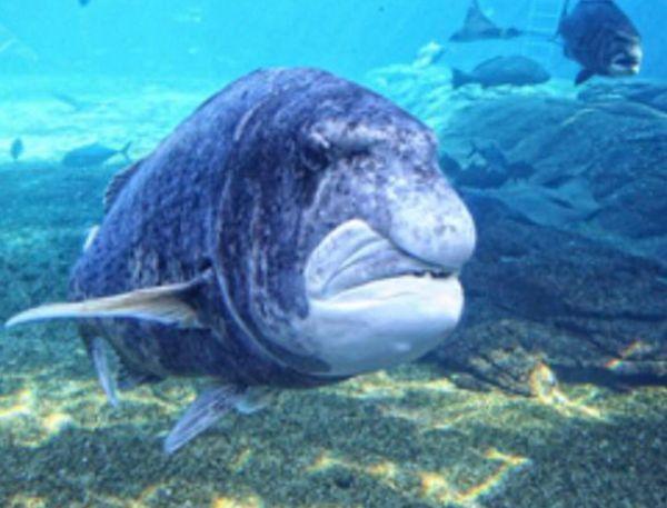 各种稀有奇特的海洋动物集体上演海底总动员.