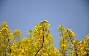 【汉中图片】走在乡间的小路上----回汉中赏油菜花儿