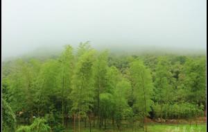 【宜兴图片】听风听雨不妨眠---宜兴竹海