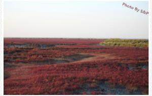 【盘锦图片】秋高气爽,蟹肥滩红——瞬间秒杀小资的美景,盘锦红海滩