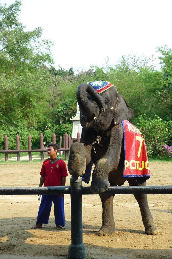 大象是泰国上下奉为神圣的吉祥动物