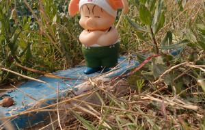 【房山图片】北京房山开天花海--北方的油菜花---小猪的两次记忆